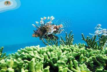 Ekosistem Bawah Laut di Taman Nasional Wakatobi