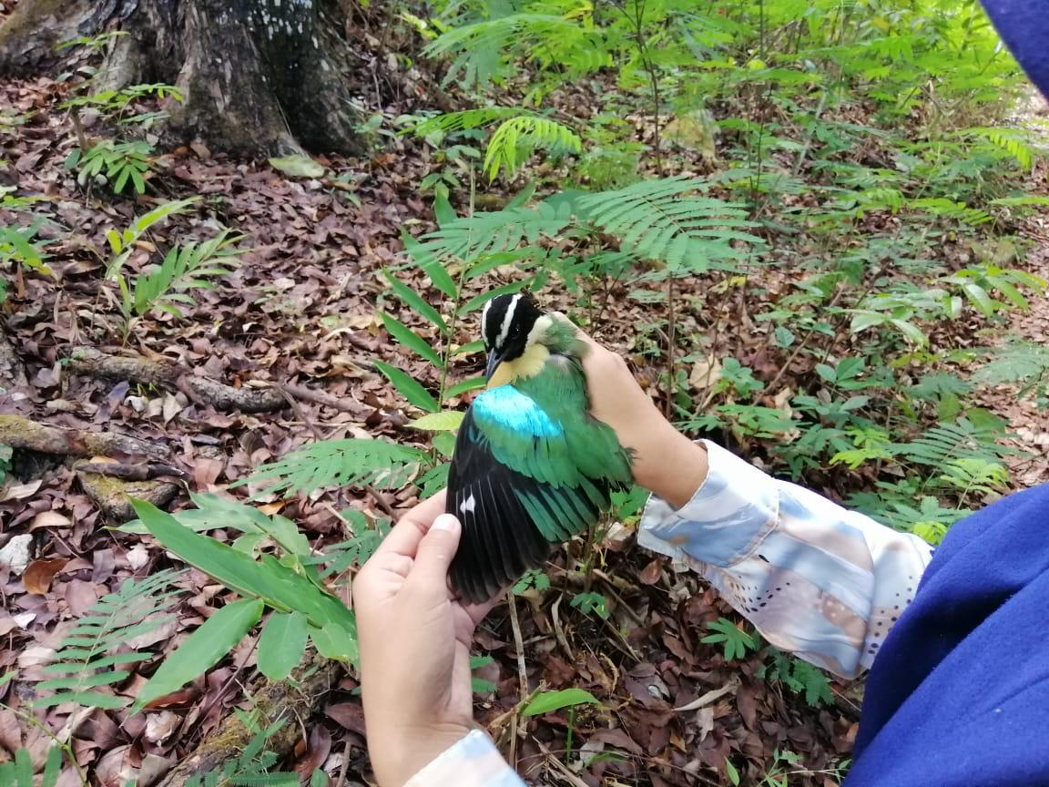 Petugas TN Matalawa Selamatkan Jenis Burung Dilindungi