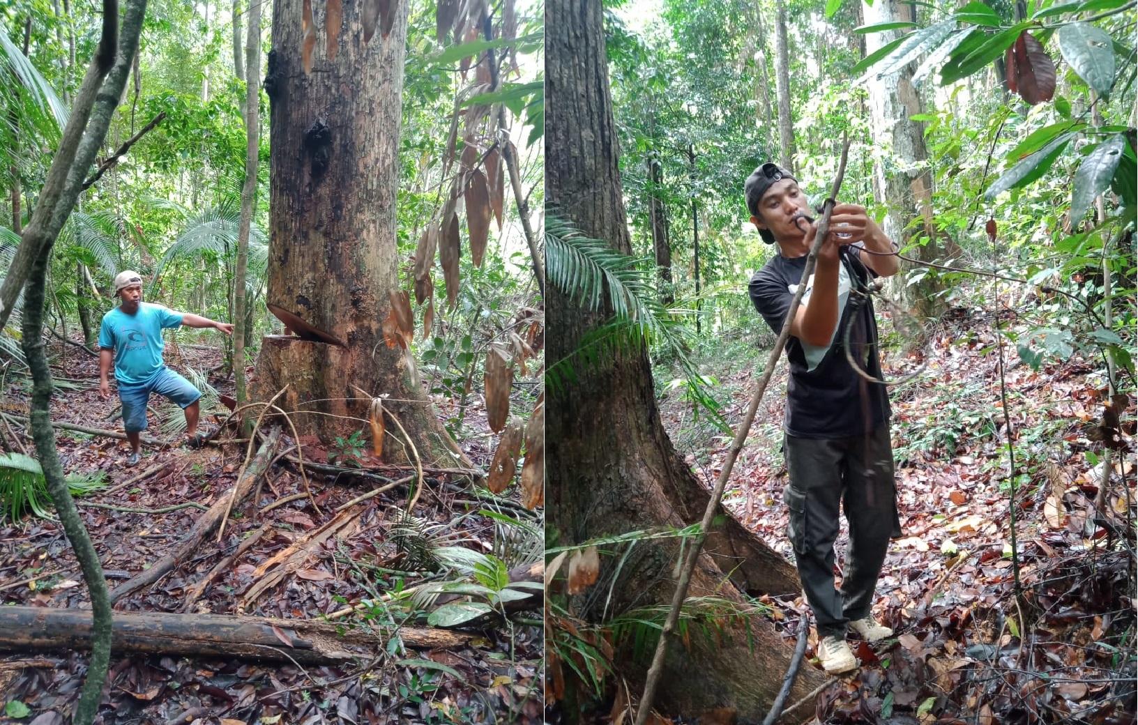BKSDA Sulawesi Tengah Lakukan Patroli Aktifitas Ilegal didalam Kawasan