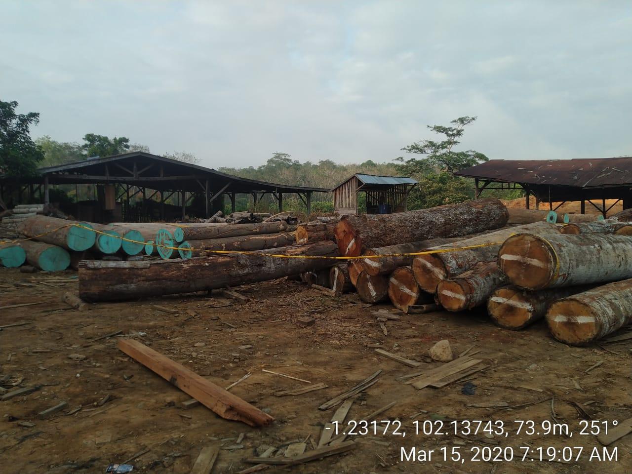 KLHK Ungkap Jaringan Peredaran Kayu Ilegal di Sumsel dan Jambi