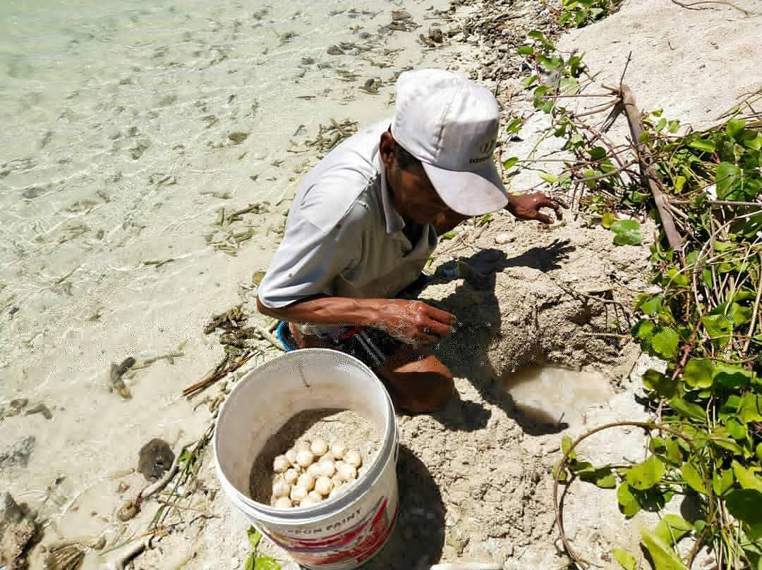 Area Urugan Pasir di Pulau Pramuka Jadi Tempat Bertelur Penyu Sisik
