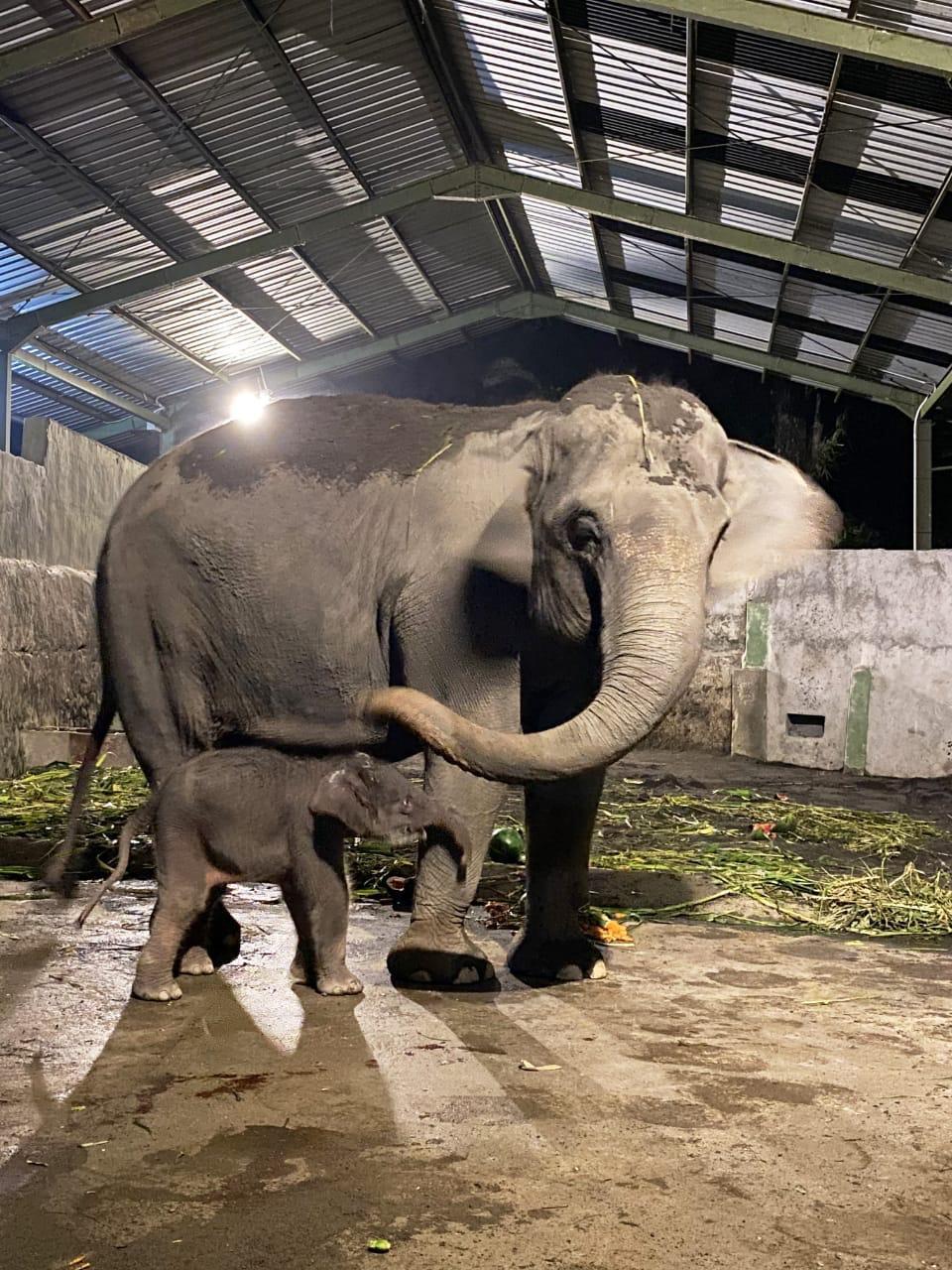 Dampak Covid-19, Menteri LHK : Kelola Kebun Binatang Harus Tahu Satwa dan Manejemen Usaha