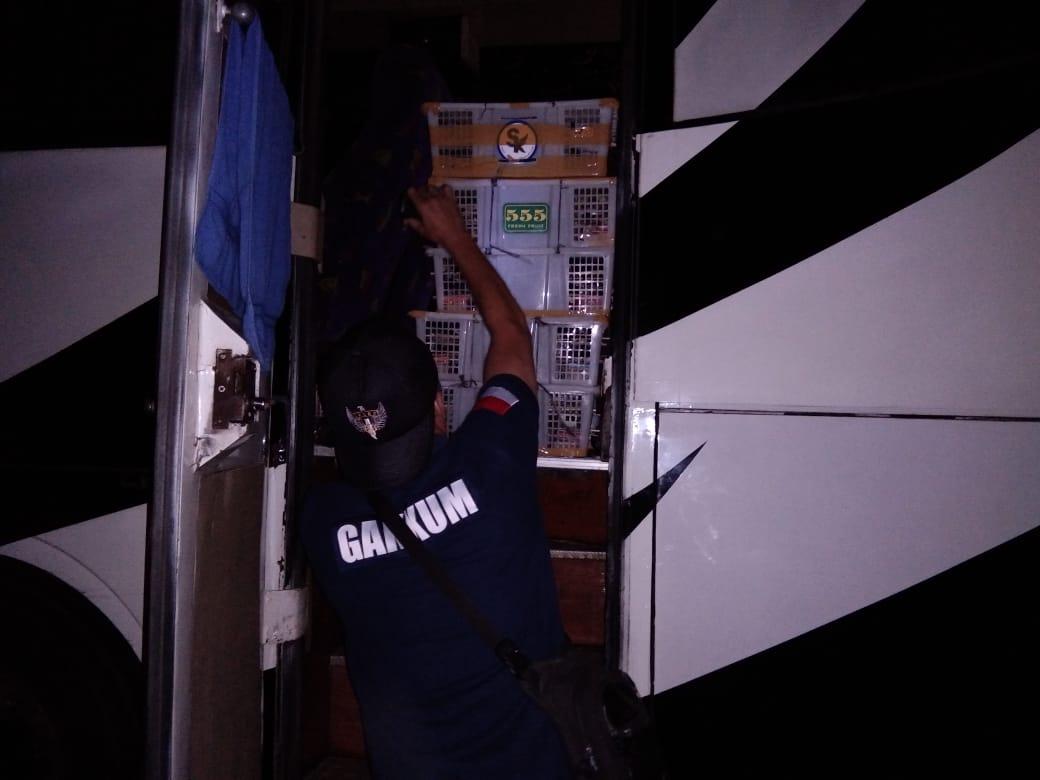 Gakkum KLHK Gagalkan Perdagangan Ilegal 1.752 Ekor Burung di Jalan Lintas Sumatera