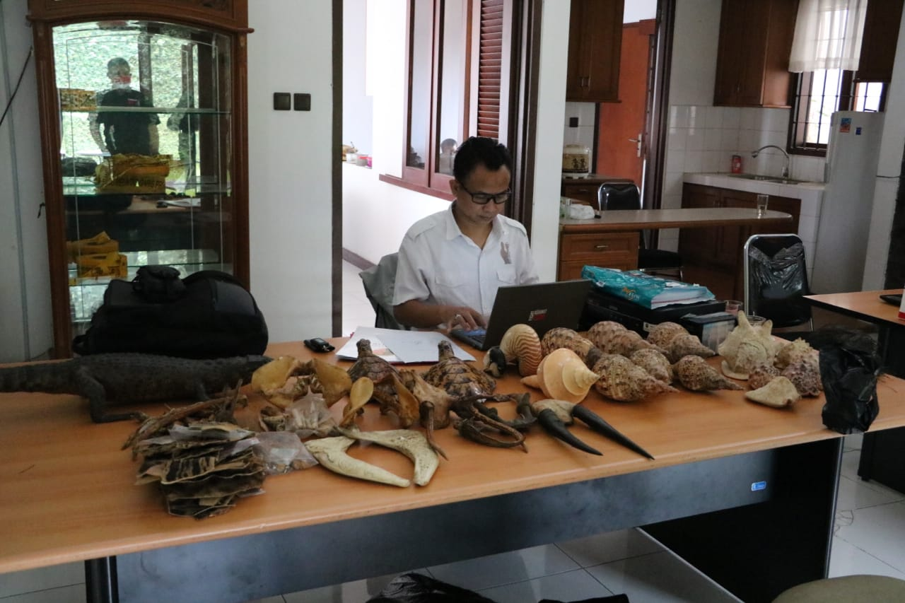 Gakkum LHK Jabalnusra Sita Ratusan Bagian Satwa Dilindungi, 1 Orang Tersangka Ditetapkan