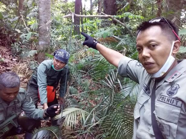 Amankan TN Bukit Tiga Puluh, KLHK Bersihkan Puluhan Jerat