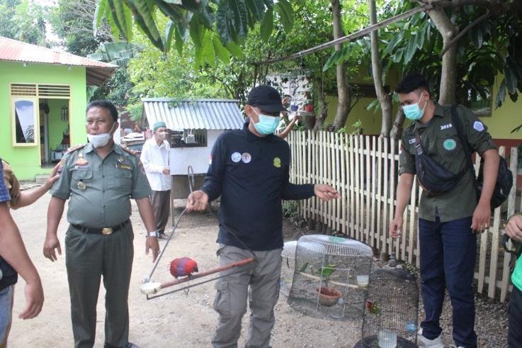 Operasi Sapu Jerat Amankan 33 Ekor Satwa Liar Dilindungi di Gorontalo dan Sulut