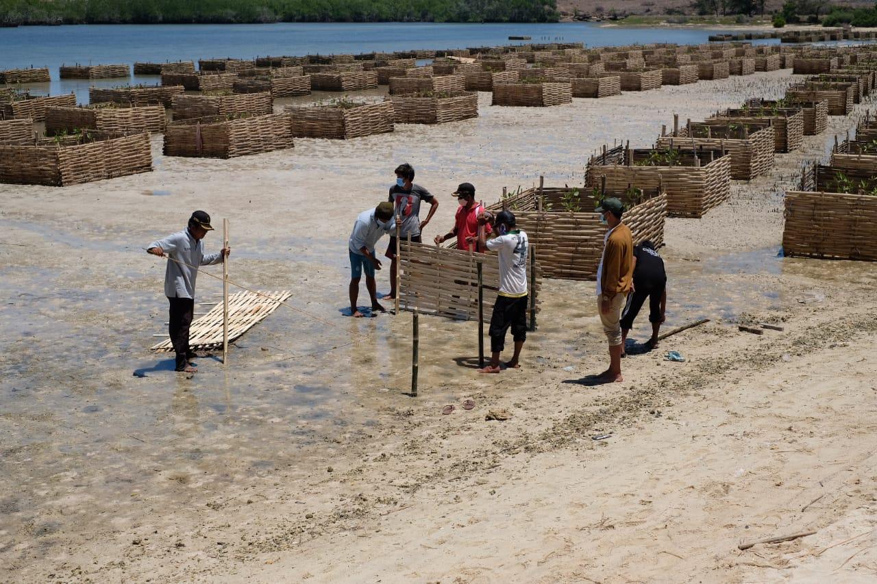 Padat Karya Penanaman Mangrove : Langkah Extra Ordinary Pulihkan Lingkungan dan Perekonomian Masyara