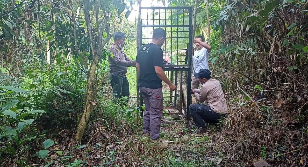 Cegah Konflik Beruang Madu, Petugas Resort Siak Lakukan Pemasangan Box Trap
