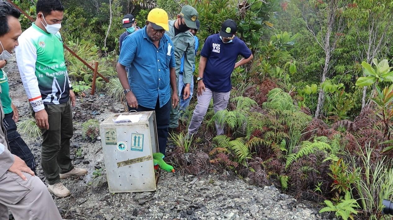 Menerapkan Kehidupan Harmoni dengan Alam, BBKSDA Papua Lepasliarkan 10 Satwa ke Habitat Alaminya