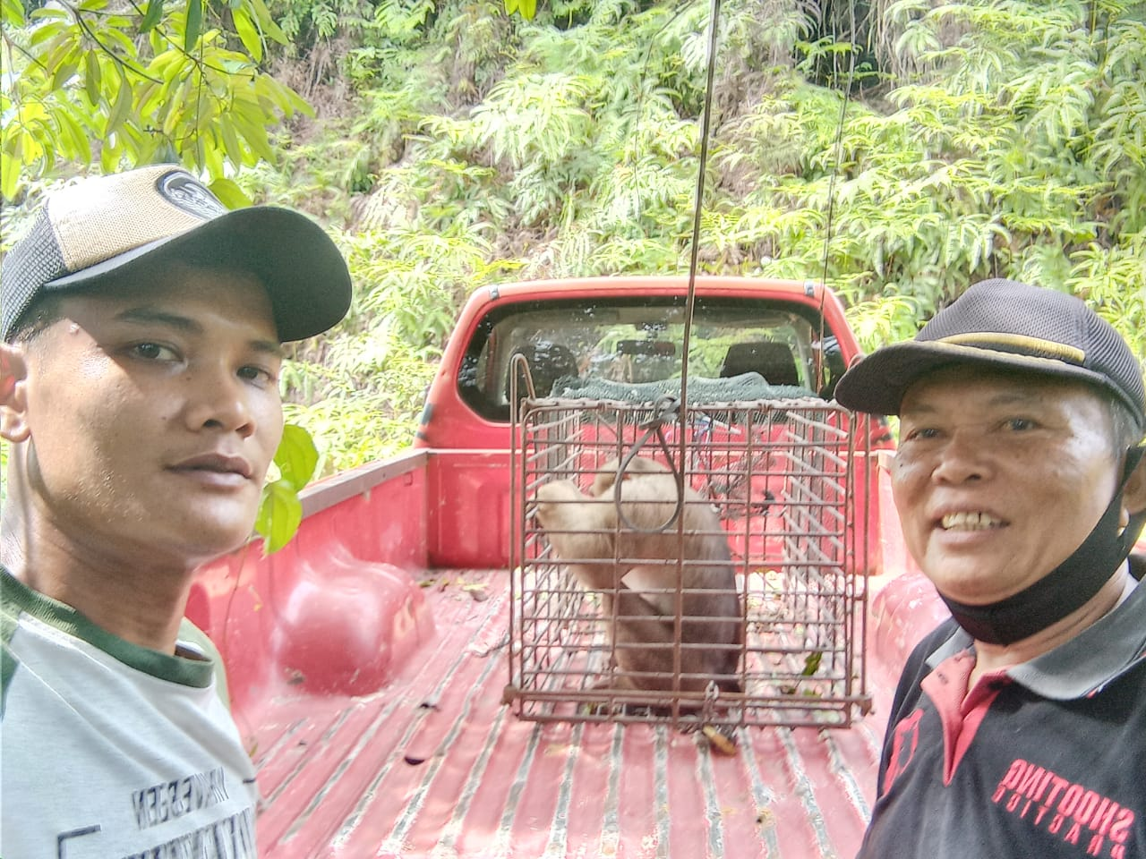 Berkeliaran dan Merusak, BBKSDA Riau Evakuasi Monyet Serahan Warga