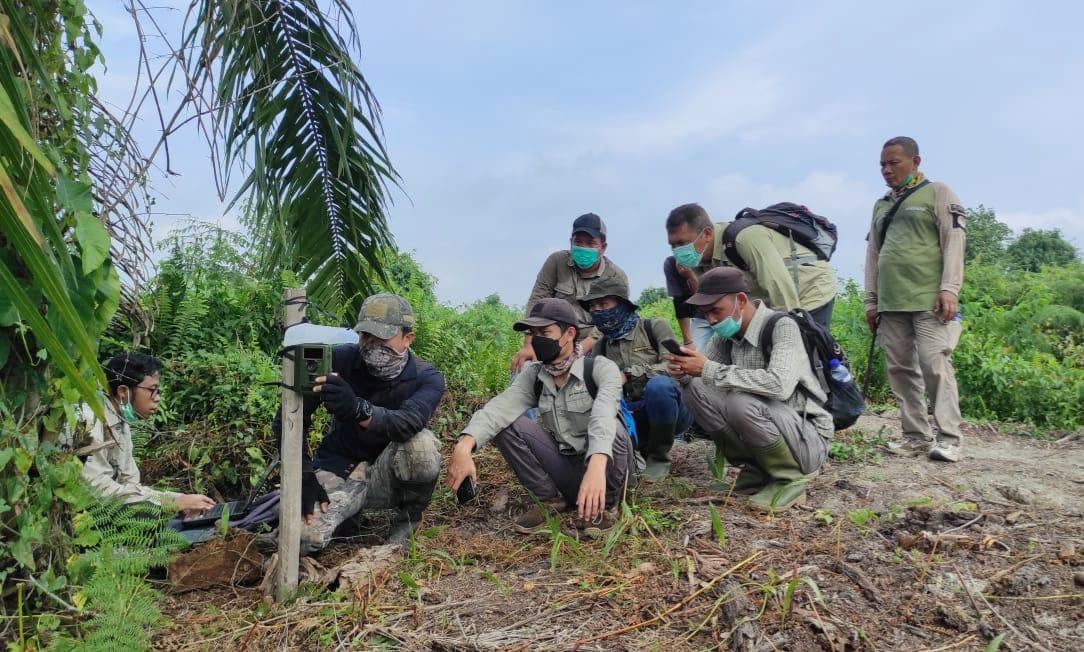 BBKSDA Riau Bekali Masyarakat Informasi Konflik Harimau Sumatera dan Manusia