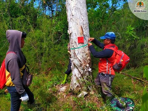 Melihat Pemulihan Ekosistem Mekanisme Alami di SM Pelaihari