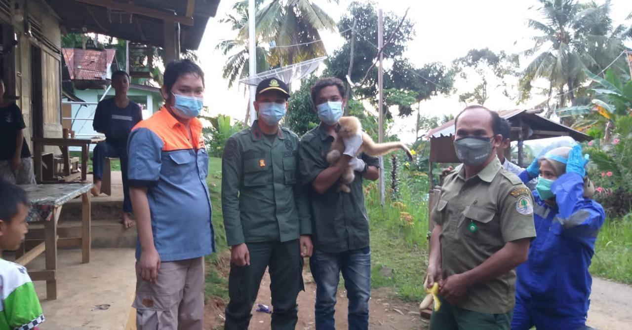 Balai Besar KSDA Sumatera Utara Evakuasi Owa Peliharaan Warga Batangtoru