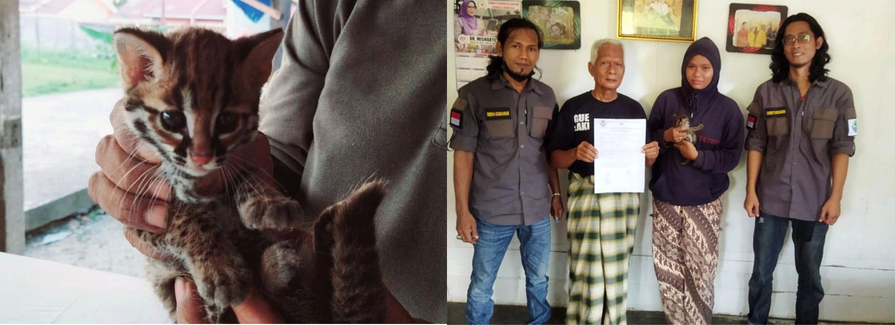 BBKSDA Riau Menerima Kucing Hutan dari ONI
