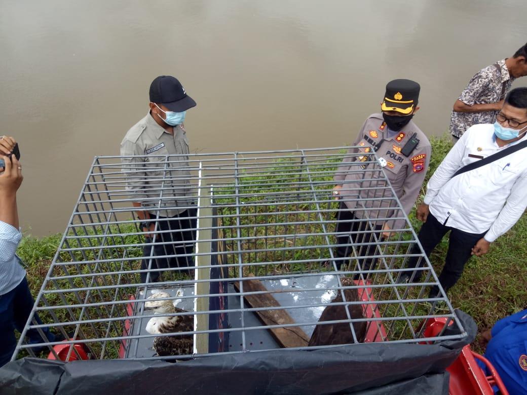 BKSDA Sumbar Melepasliarkan Burung Elang Brontok di Kawasan Mangrove  Jorong Muaro Putuih, Sumbar