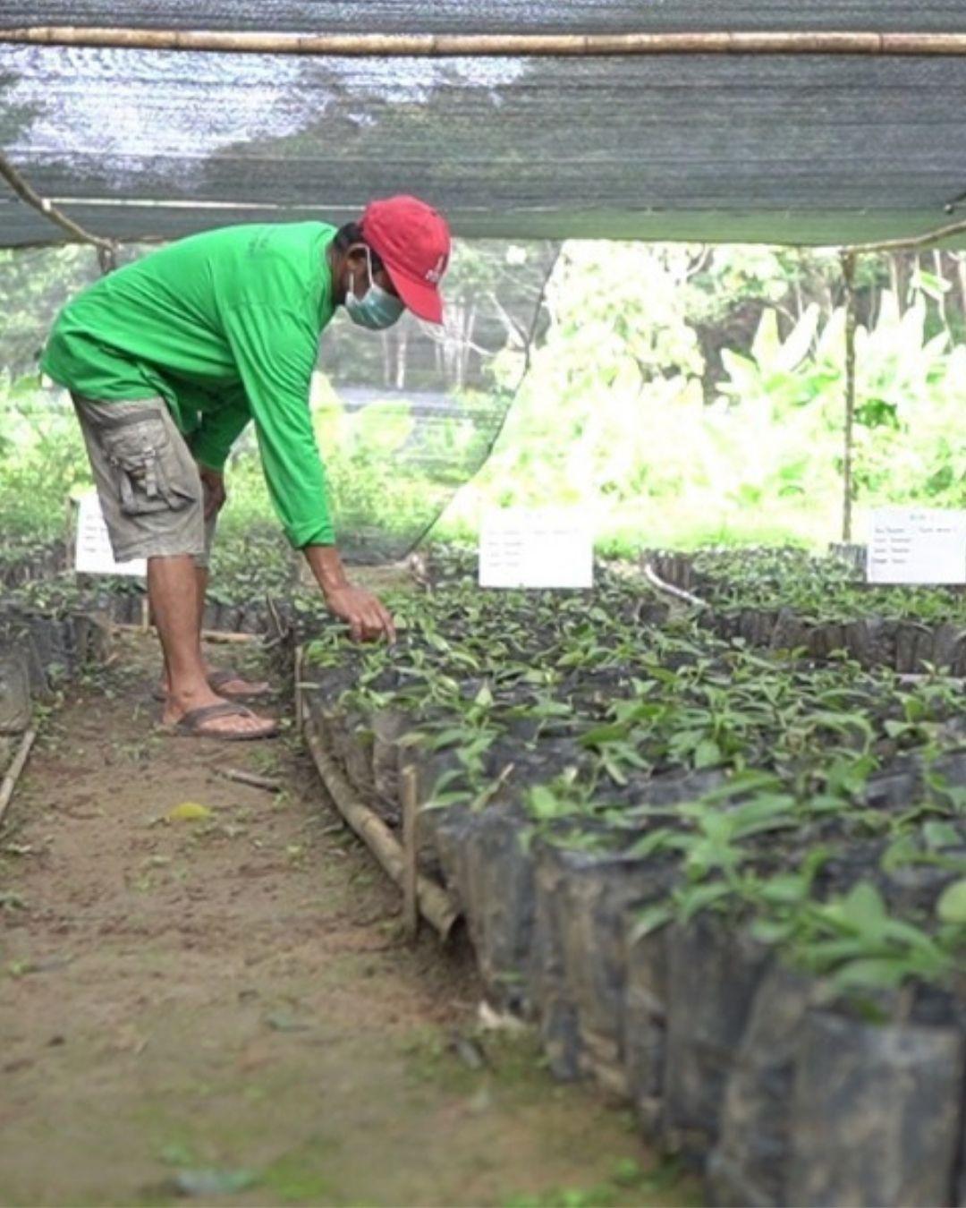 Menggali Rezeki, Petani Kembangkan Vanili
