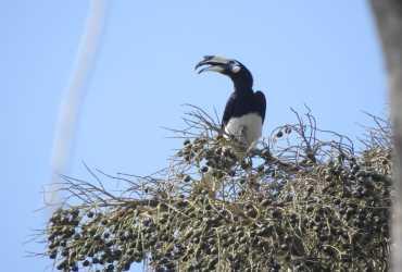 Balai Besar KSDA Jawa Timur dan ProFauna Dokumentasikan Burung Pulau