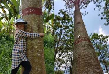 B2P2BPTH Yogyakarta Berhasil Kembangkan Sengon Unggul Tahan Penyakit