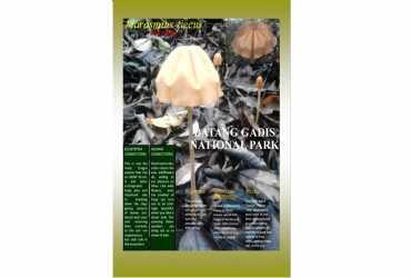 Fungi/jamur dari Taman Nasional Batang Gadis