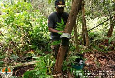 Pemantauan Harimau Sumatra di SM Bukit Batu