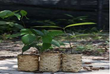 Inovasi di Masa Pandemi, Balai TANAGUPA Berdayakan Masyarakat Kembangkan Ecopolybag