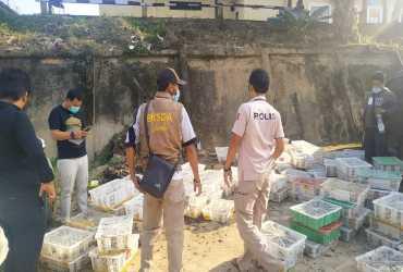 Tim Gabungan Berhasil Gagalkan Penyelundupan Burung Tanpa Dokumen