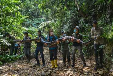 Ular 9 Meter Diserahkan ke BBKSDA Riau